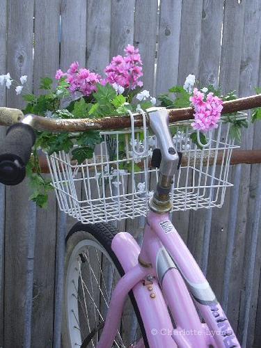 Pink_basket